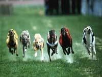hunderennen