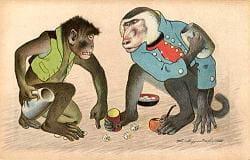 Apes gambling