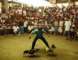 Cockfighting ring