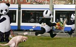 Pandas in park