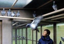 Wedden op duiven China