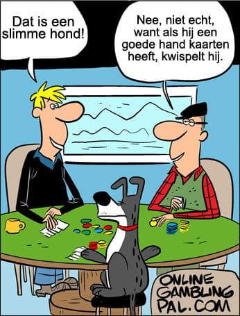 Hond speelt poker
