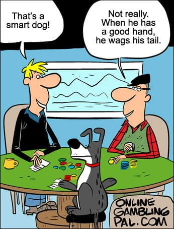 Dog playing poker